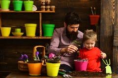 Nature d'amour d'enfant d'homme barbu et de petit gar?on jardiniers heureux avec des fleurs de ressort Jour de famille greenhouse photos stock