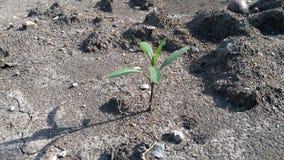 Nature d'arbre Photo libre de droits