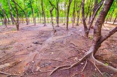 Nature d'arbre dans le jardin, Image libre de droits