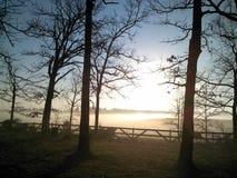 Nature d'arbre de crépuscule Image libre de droits
