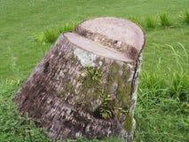 Nature d'arbre de tronçon Images libres de droits