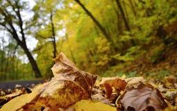 Nature d'automne photographie stock libre de droits