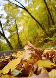 Nature d'automne photographie stock