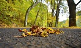 Nature d'automne photo libre de droits