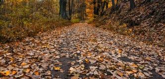 Nature d'automne photos libres de droits