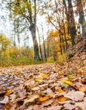 Nature d'automne images libres de droits