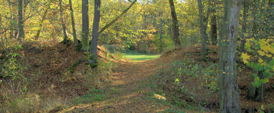 Nature d'automne Image libre de droits