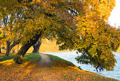 Nature d'automne Photo stock