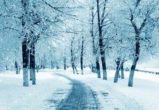 Nature d'hiver, tempête de neige Photos libres de droits