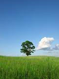 nature d'horizontal Image stock