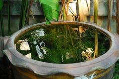 Nature d'ombre dans le pot thaïlandais Photo stock