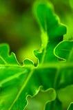 Nature dans désordonné Photo libre de droits