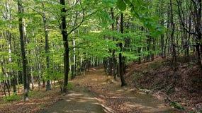 Nature dans la forêt Photos libres de droits