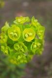Nature dans la macro photo Photo libre de droits