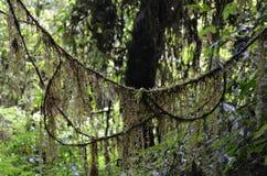Nature dans la montagne Images stock