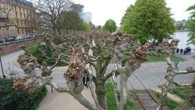 Nature dans la ville Photos stock