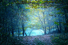 Nature. Dark forest. Nature. Path in dark green old forest Stock Images