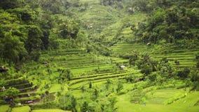 Nature de Balinese banque de vidéos