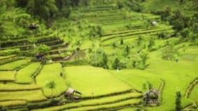 Nature de Balinese clips vidéos
