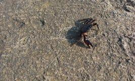 Nature de beauté d'été de crabe de ‹d'†de ‹d'†de mer du ¹ краб du ¾ Ð du  кРdu ¾ Ñ€Ñ de МРphoto stock