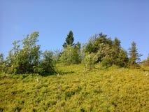 Nature de Carpathiens Photo stock