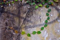 Nature de ciment de mur Image libre de droits