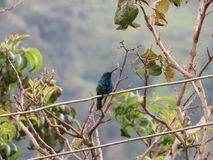 The nature in de cocora valley salento Royalty Free Stock Images