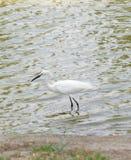 Nature de faune Photos libres de droits