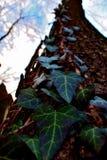 Nature de forêt Image libre de droits