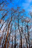 Nature de forêt Images libres de droits