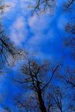 Nature de forêt Photos stock