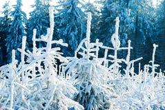 Nature de forêt de l'hiver   image stock