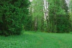 Nature de forêt de pré de forêt d'été de chemin Photos stock
