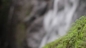 Nature de jungle Cascades et usines banque de vidéos