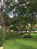 Nature de Key West la Floride les Etats-Unis Image libre de droits
