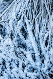 Nature de l'hiver Image stock