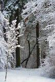 Nature de l'hiver la première neige dans la forêt Images libres de droits