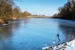 Nature de l'hiver Lac oiseaux Photo stock