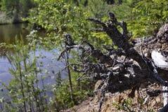 Nature de la Carélie Photo stock
