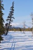 Nature de la Laponie Images stock