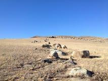 Nature de la Mongolie image libre de droits