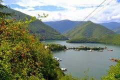 Nature de lac de hanche de Rose Image stock