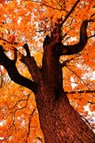 Nature de parc de Tsaritsyno à Moscou photographie stock libre de droits