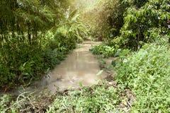 Nature de petite rivière en Thaïlande photo stock