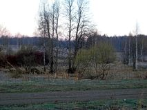 Nature de ressort sans nuages, soirée d'avril photo stock