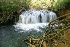 Nature de Serbian de Lisine Photo stock