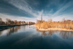 Nature de source Bois d'arbres se tenant dans l'eau pendant une inondation de ressort photographie stock libre de droits