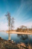 Nature de source Bois d'arbres se tenant dans l'eau pendant une inondation de ressort photos libres de droits