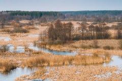 Nature de source Bois d'arbres se tenant dans l'eau pendant une inondation de ressort image stock