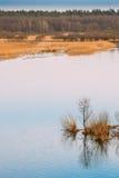 Nature de source Bois d'arbres se tenant dans l'eau pendant une inondation de ressort photo libre de droits